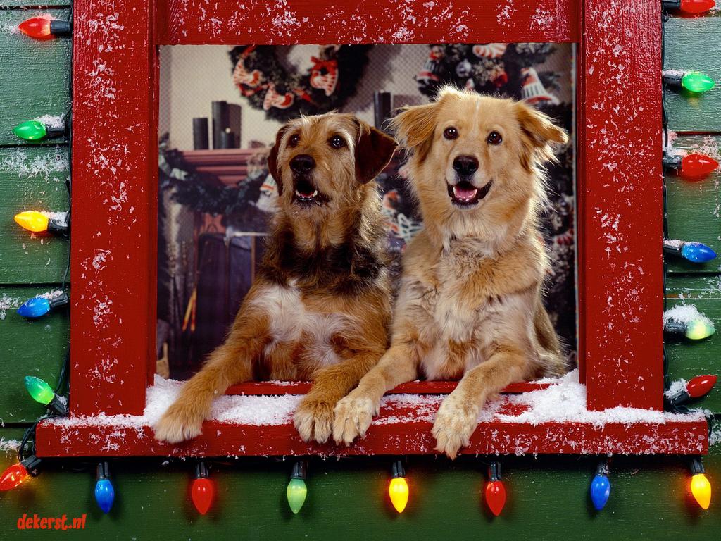 De Leukste Kerstachtergronden De Kerst Nl De Leukste